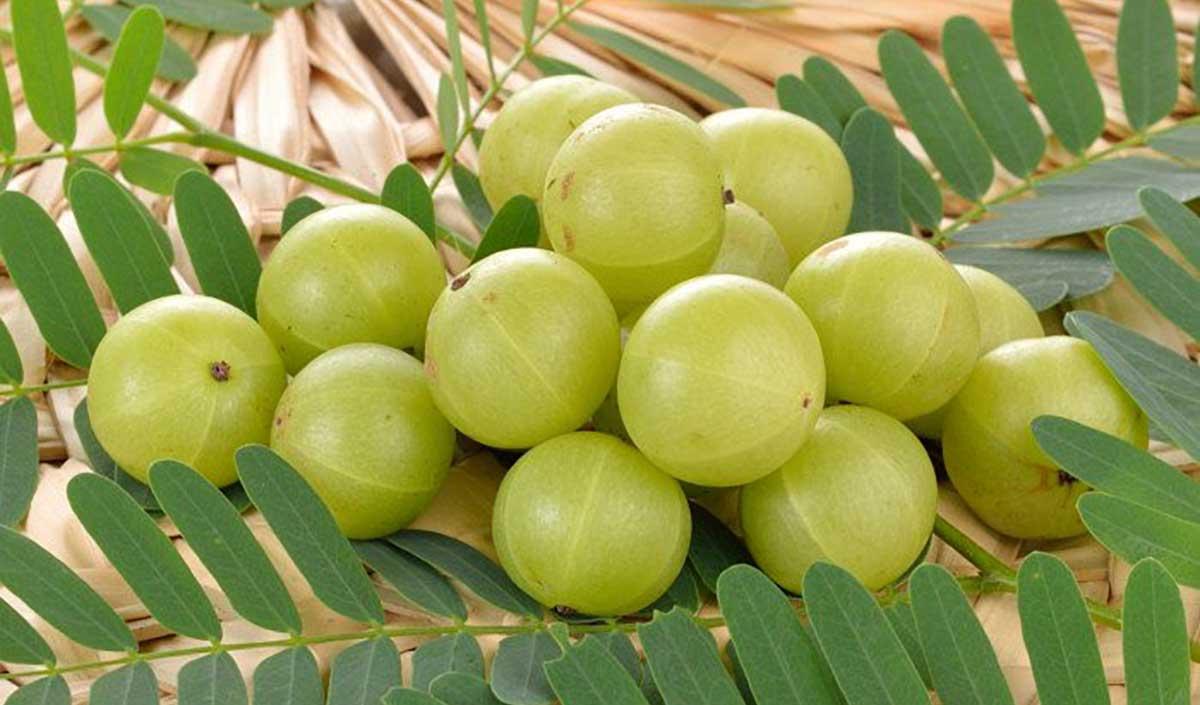 La poudre d'Amla, pour les cheveux - Moqolo Beauté : Produits ...